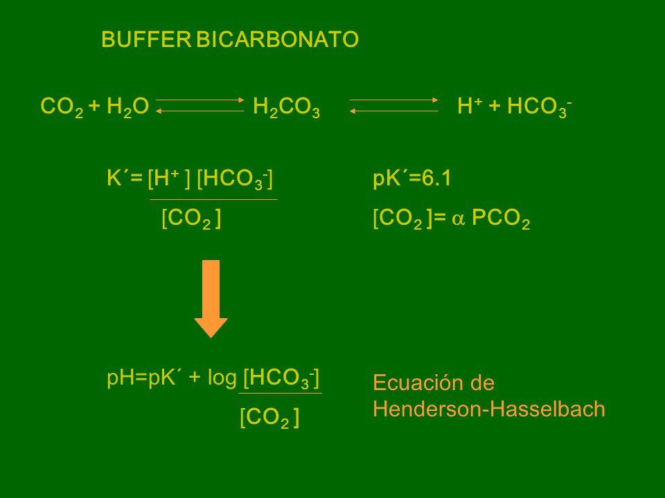 BUFFER BICARBONATO CO2 + H2O H2CO3 H+ + HCO3- K´= [H+ ] [HCO3-] pK´=6.1. [CO2 ] [CO2 ]= a PCO2.